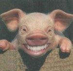 pig-teeth
